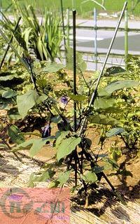 GF005 ไม้ค้ำต้นไม้ สามขา Plastic tripod for plant