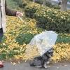 ร่มกันฝนสุนัขและแมว
