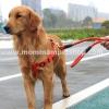 สายจูงสุนัขโต แบบรัดอก สีแดง