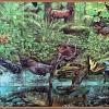 จิ๊กซอว์ ภาพศิลป์ระดับโลก Jigsaw Puzzle World class artists - Coast Rainforest
