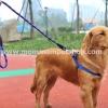 สายจูงสุนัขโต แบบรัดอก สีน้ำเงิน