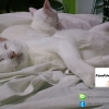 สุนัขและแมวกระตุกเวลานอน เป็นอันตรายหรือไม่