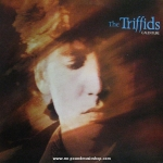 The Triffids - Calenture