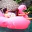 Preorder Flamingo เป่าล่ม thumbnail 1