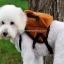 กระเป๋าเป้สุนัข กระเป๋าเป้แมว ลายหมีน้ำตาล thumbnail 3