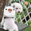 กระเป๋าเป้สุนัข กระเป๋าเป้แมว ลายหมูขาว thumbnail 2