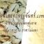 สมุนไพรกวาวเครือขาว Pueraria Mirifica thumbnail 1